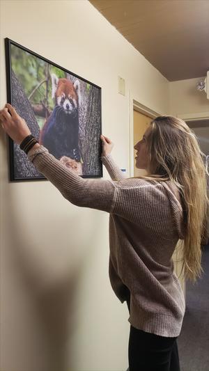 Kelly Lanigan installing a photo