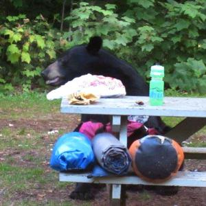A bear visited the campsite.