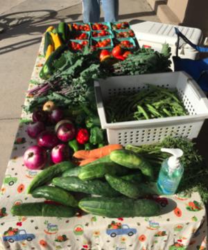 UMD farm produce on a table in Morgan Park