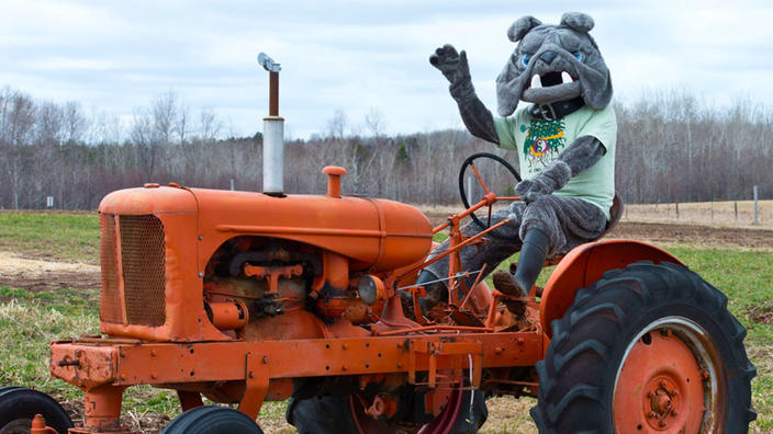 Champ on a tractor