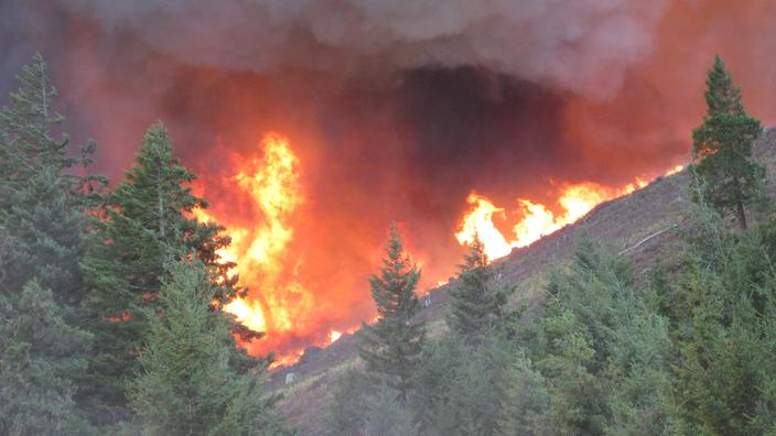 Flames in pine trees - Forest fire in Oregon