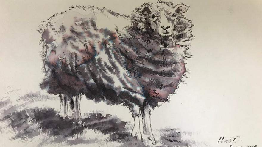 Pen and Ink drawing of sheep.