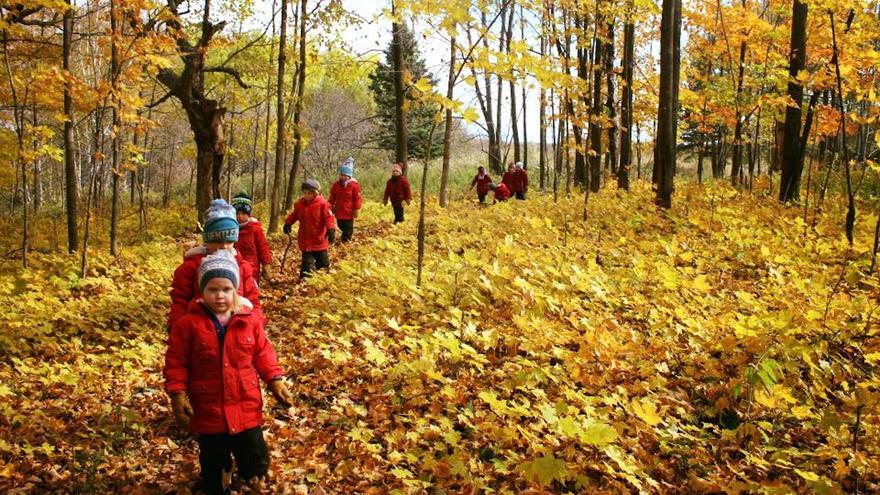 Children walk in the woods