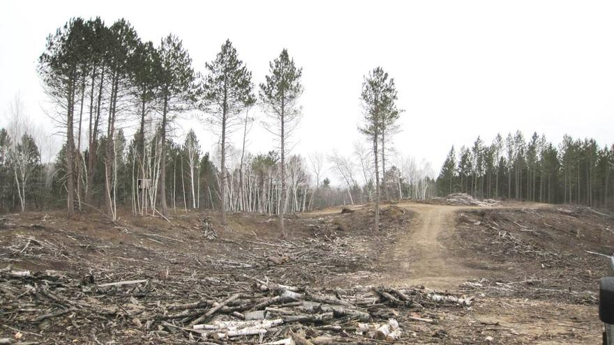 Trees cut down at Hartley Nature Center