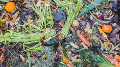 A compost pile