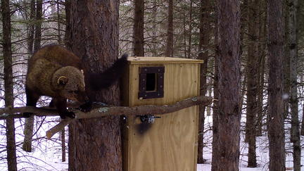 Fisher outside of NRRI-installed nesting box
