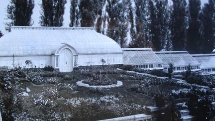 Old photo of Glensheen greenhouse