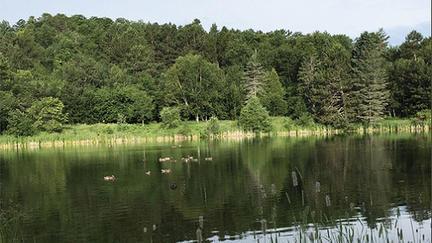 UMD's Bagley Pond