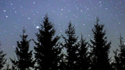 Stars and pine trees