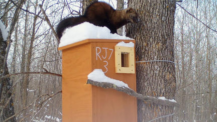UMD NRRI photo of Fisher on top of fisher box