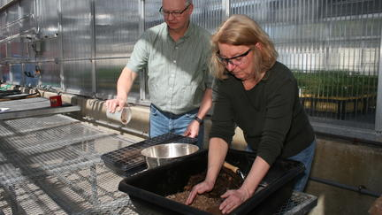 NRRI researcher Marsha Patelke working with soil in a small black plastic tub. Behind her, Kurt Johnson, peat scientist, pours soil into a tray.