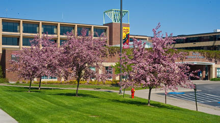 Flowering trees on the University of Minnesota Duluth campus