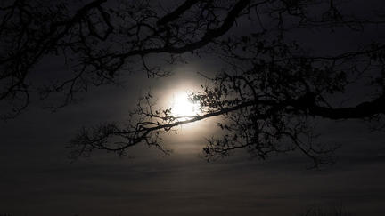 Moon glowing in the night sky partially hidden by tree branches