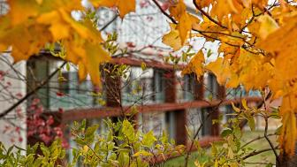 UMD campus building seen through fall foliage