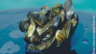 sea grant shells