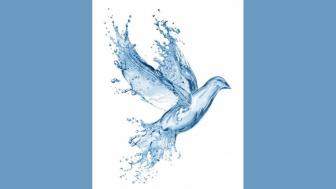 image of a dove that looks like it is made from water