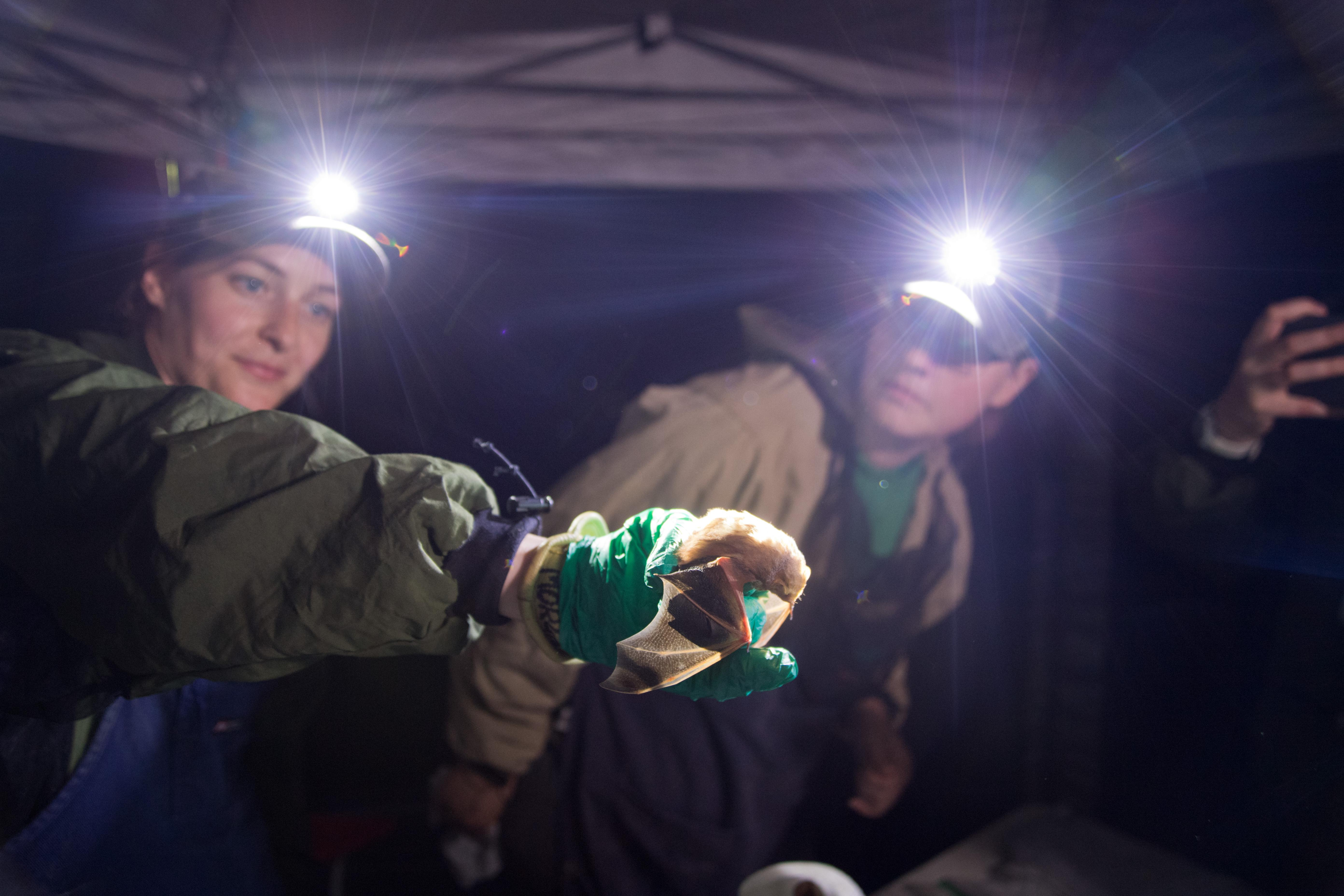 NRRI researchers with headlamps and a bat in their hand.