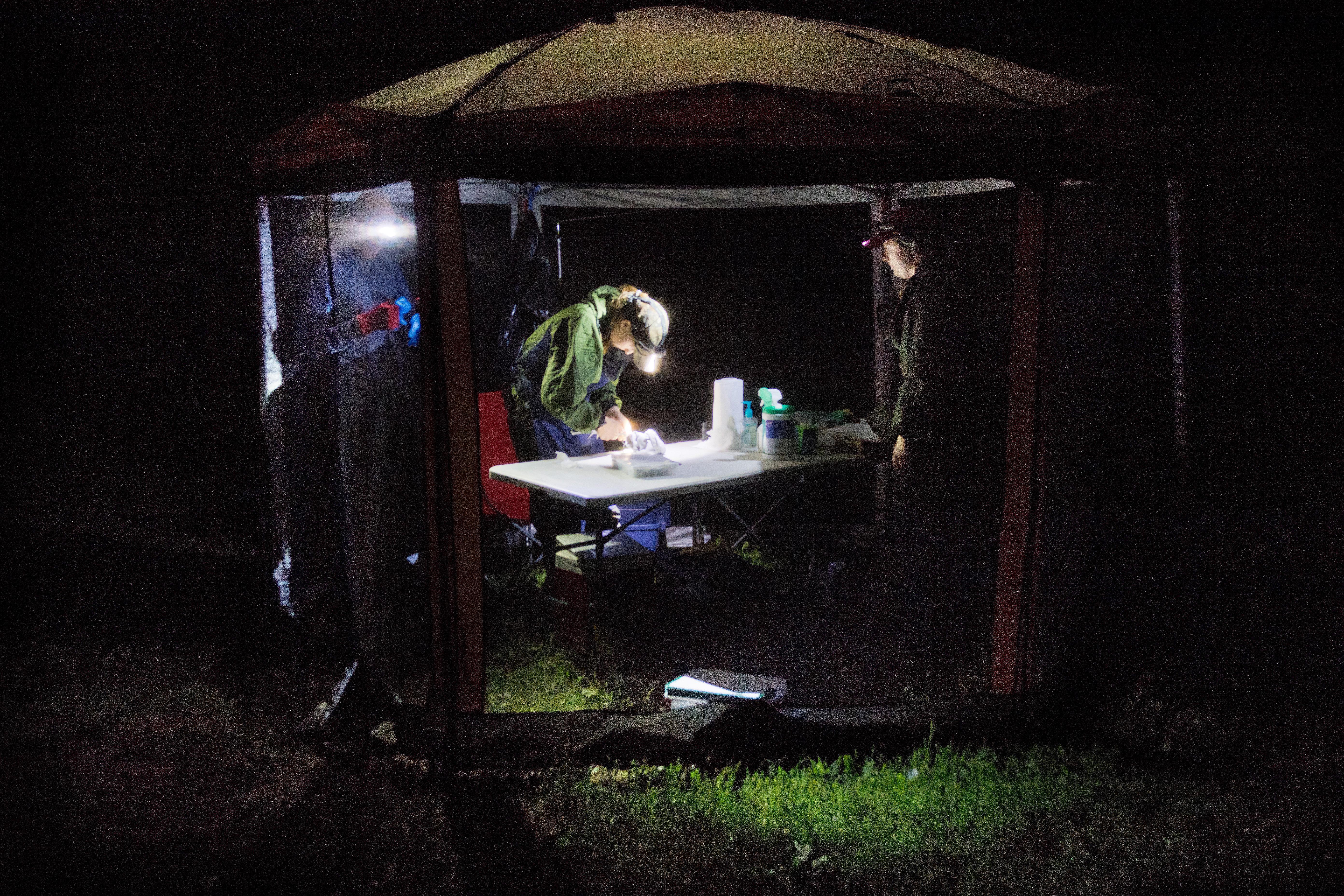 Exterior of NRRI bat researchers' tent at night