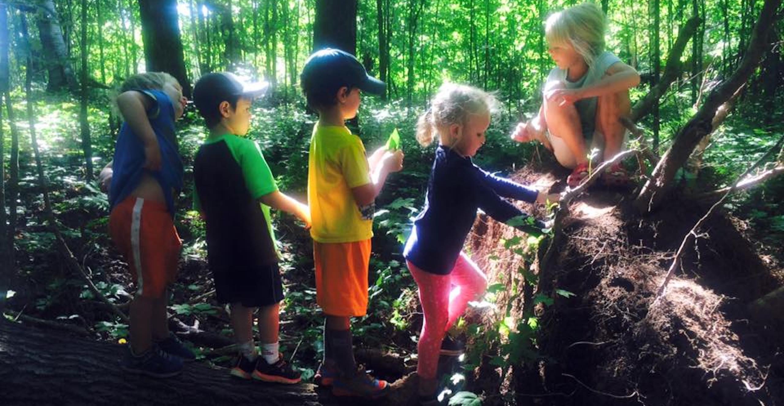 Children investigate fallen logs,